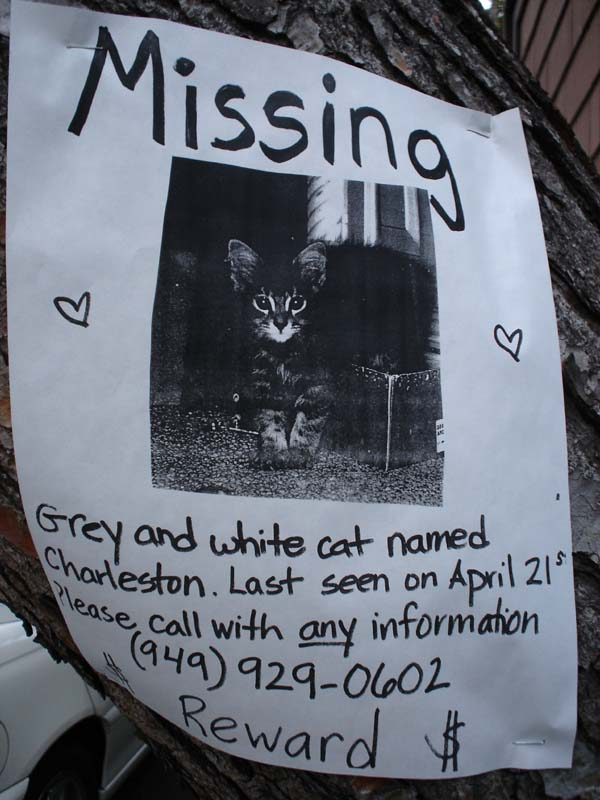 samples of missing pet flyers